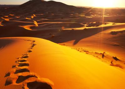desert trip to the sahara